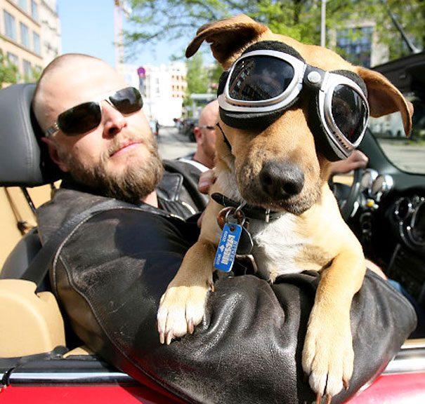 22-dog-owner-dopplegangers