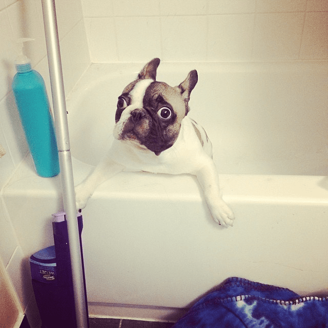 dogs-in-the-bath10