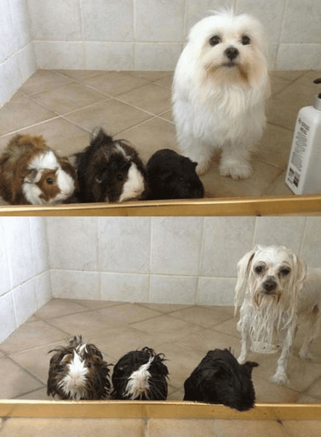 dogs-in-the-bath4