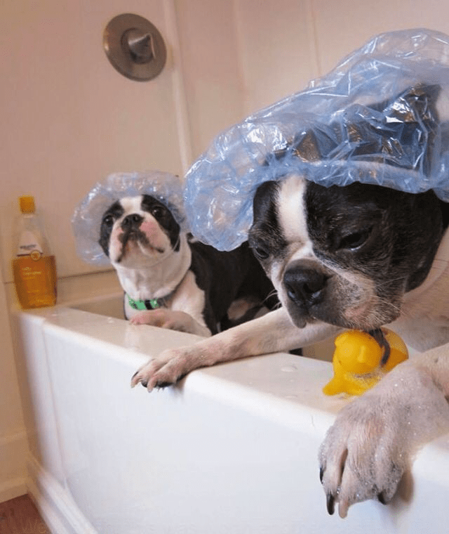 dogs-in-the-bath8