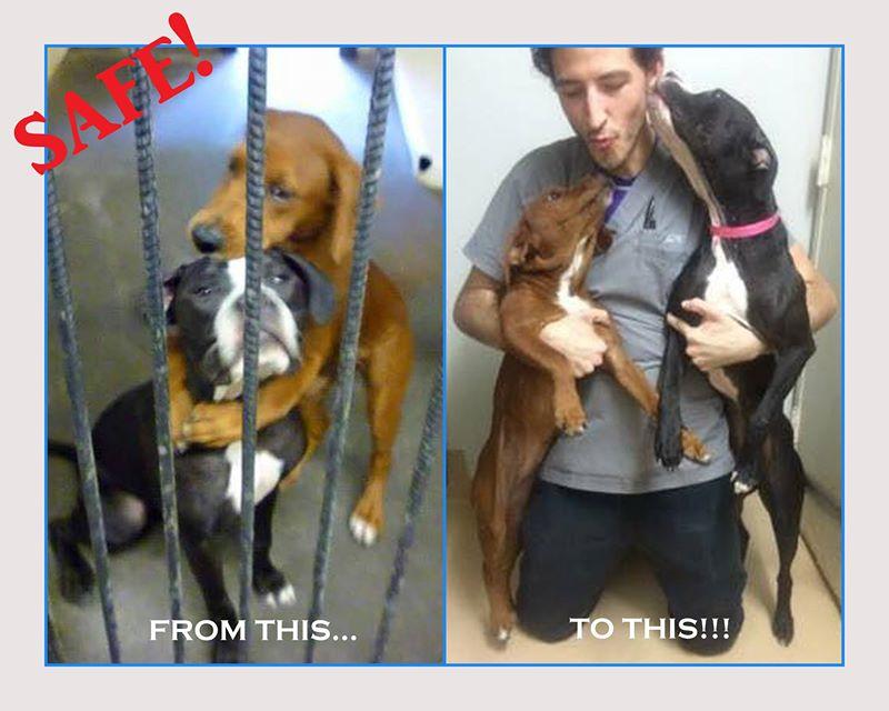 shelter dogs hug2