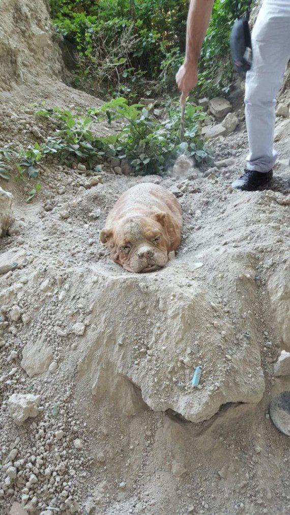 Dog buried alive saved