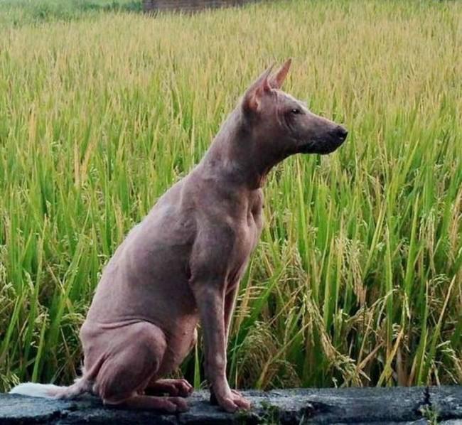 Stray dog transformation