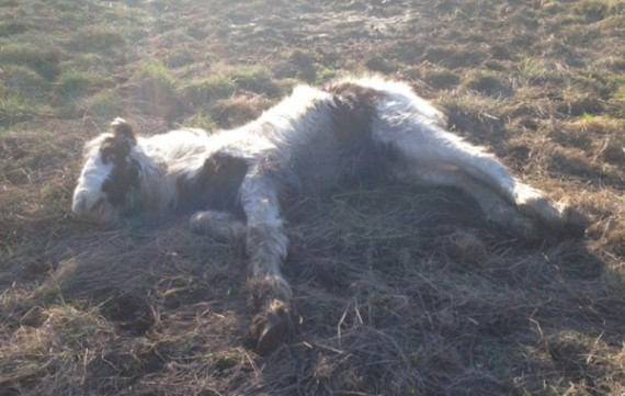 dying colt saved