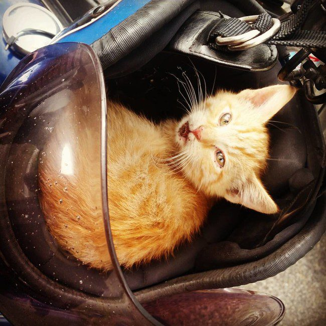biker kitten