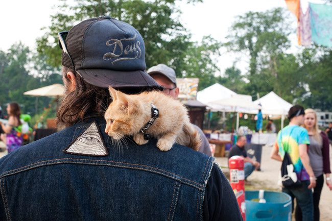 biker kitty
