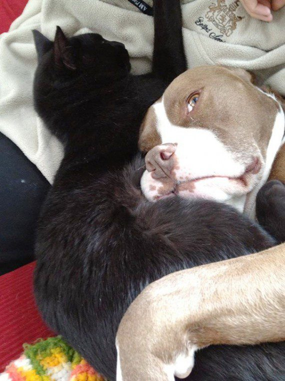 cats and dogs as friends
