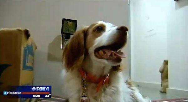 cop saved dog