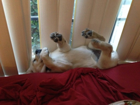 dogs awkward positions