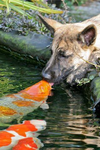 fish dog kiss