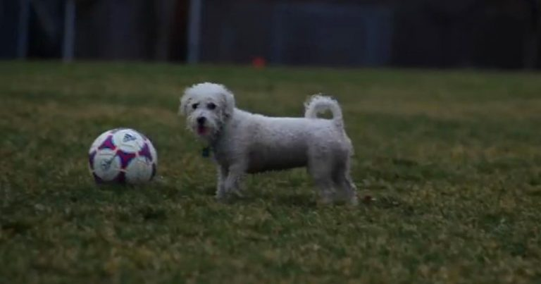kipper mac soccer dog
