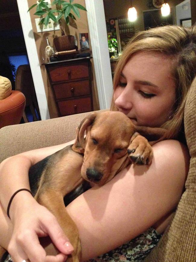 pet cuddle