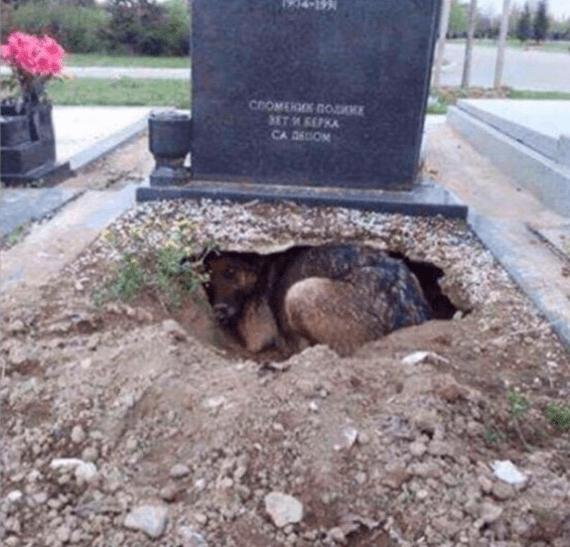 grave den dog