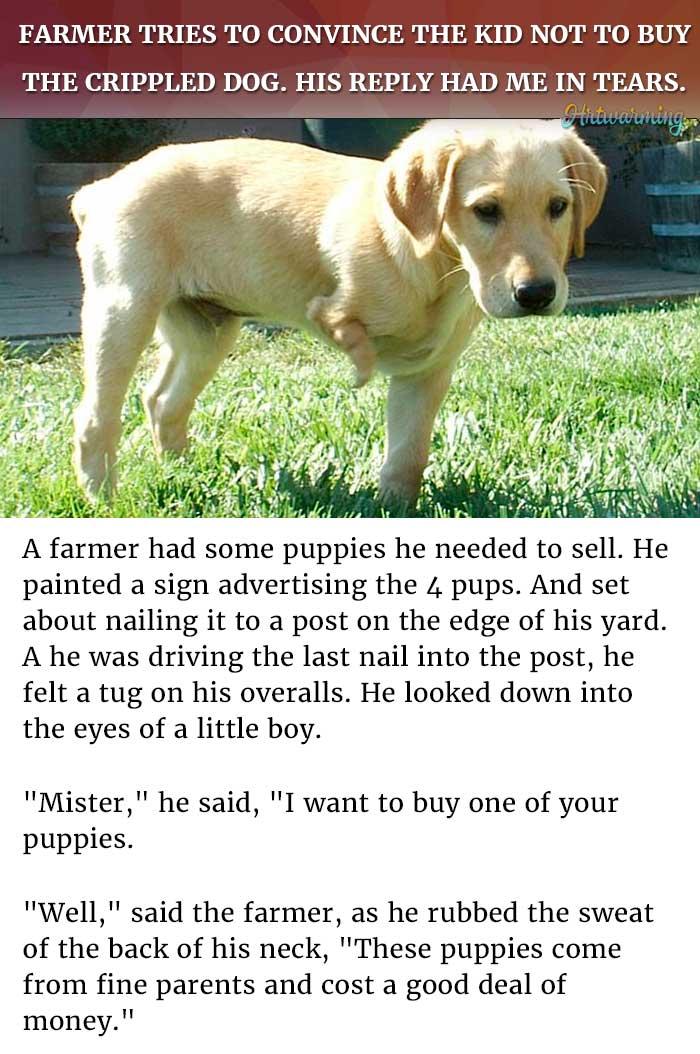 crippled puppy