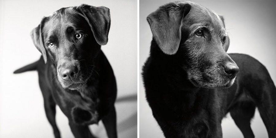 amanda jones dog photography