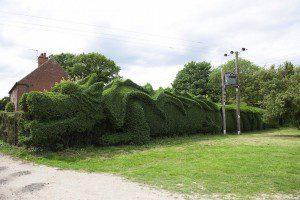 01-dragon-hedge