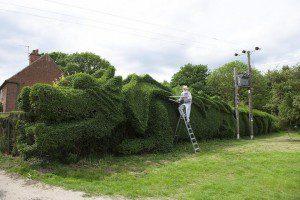 03-dragon-hedge