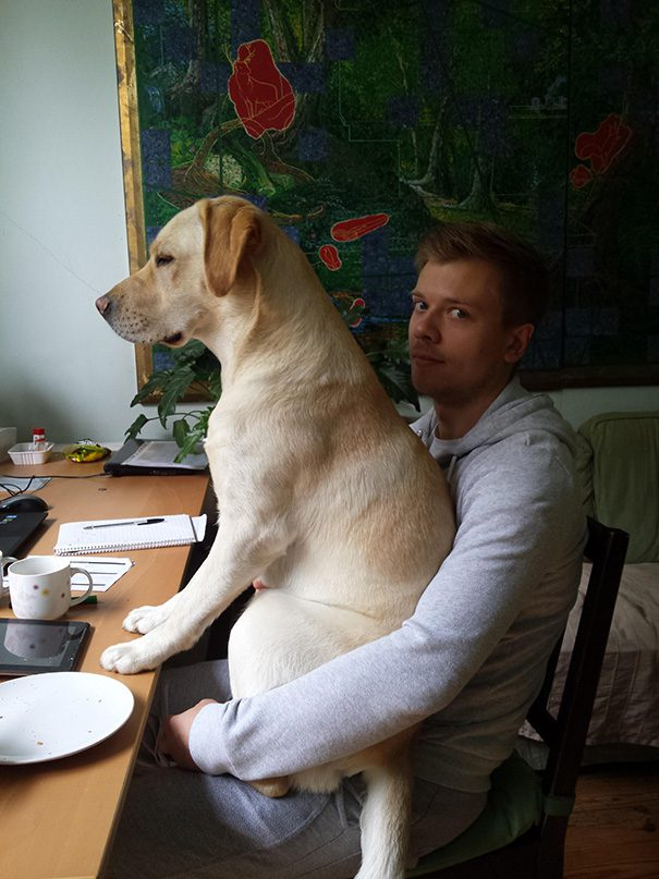 07-dogs-being-