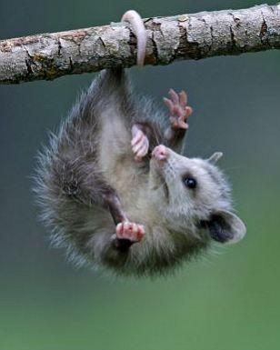 11-tail-hanging