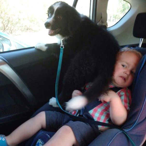 12-dogs-being-
