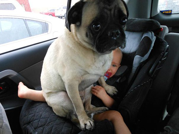 17-dogs-being-