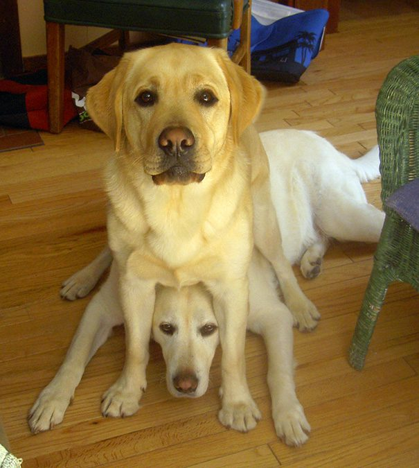 23-dogs-being-
