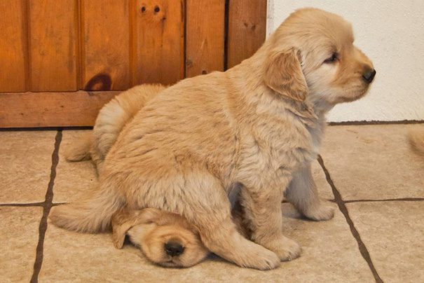 25-dogs-being-