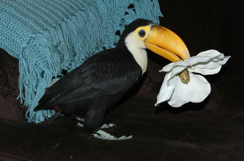 3-the-toucan-brought-u-flowers
