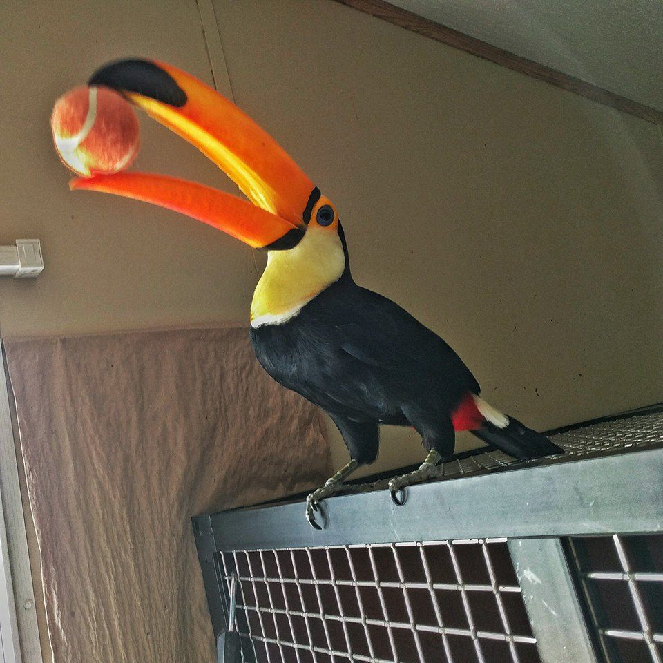 4-toucan-plays-catch