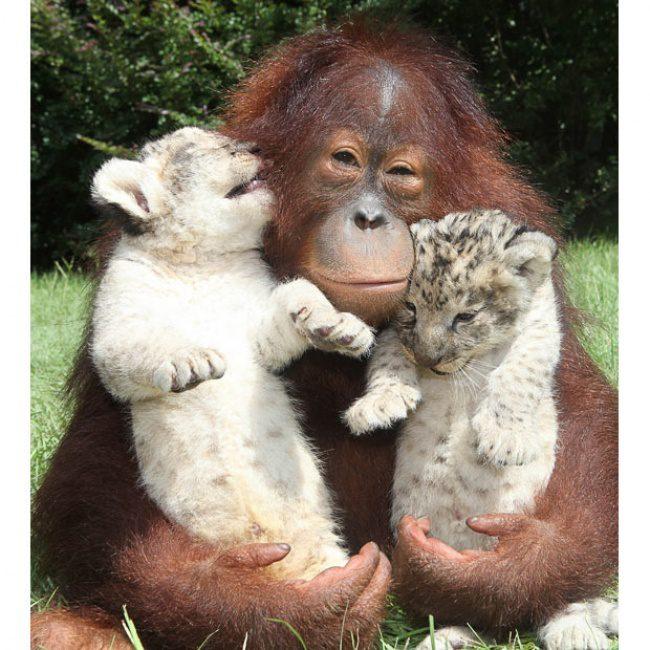 International-Hug-Day-5