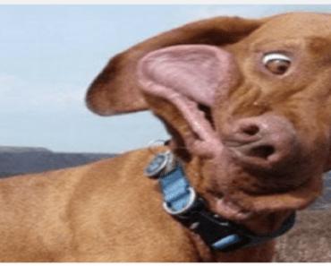 adorabke dorky dog breeds