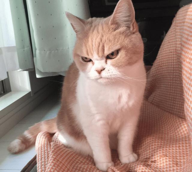 cat glare 1