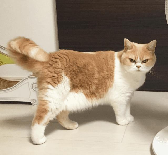 cat glare2