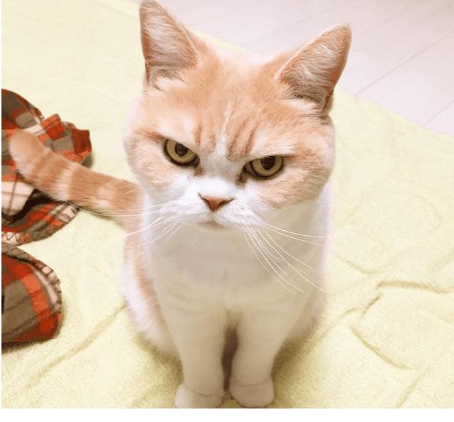 glare cat