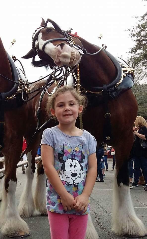 horse photo2