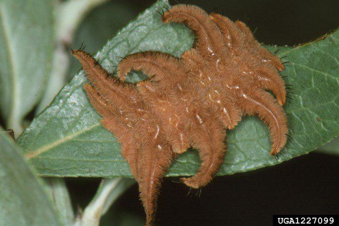 monkey-slug-3-664x443
