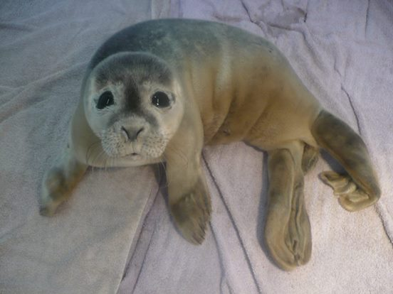 sea pup2