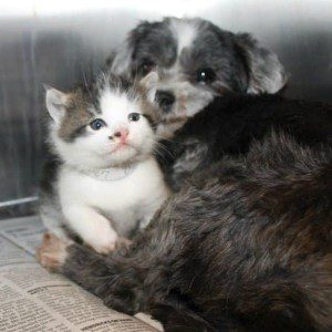 shih-tzu-kitten-ravine-rescue-5