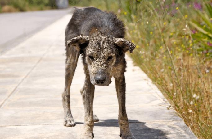 stonedog1