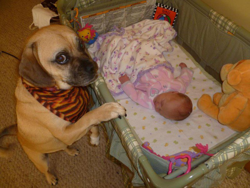 03-dogs-with-babies