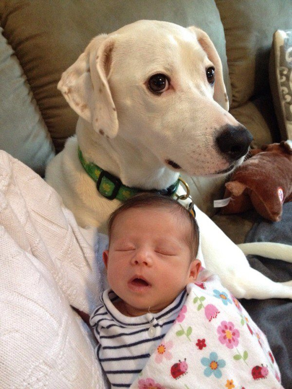 04-dogs-with-babies (2)