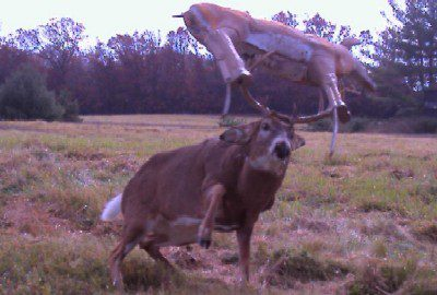 05-trail-cam-animals-funny-when-humans-arent-around