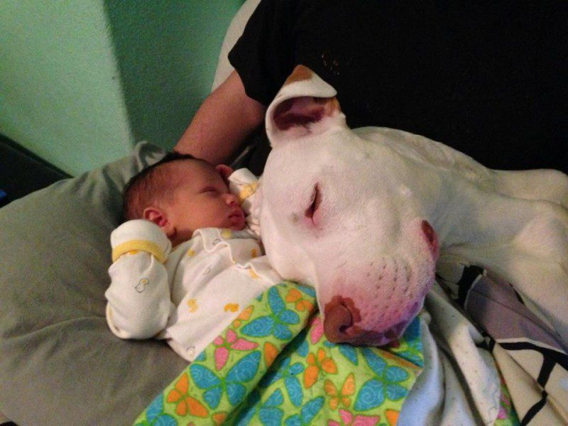 07-dogs-with-babies