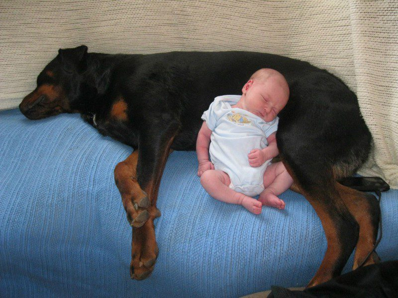 08-dogs-with-babies