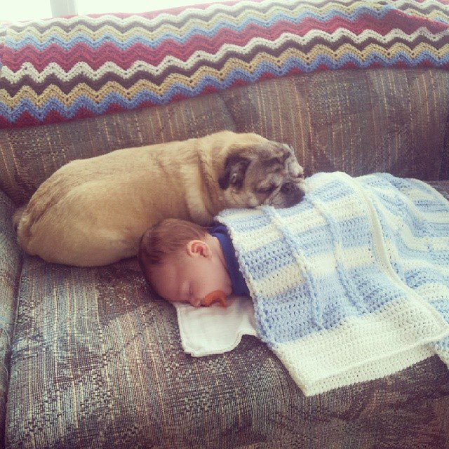 09-dogs-with-babies