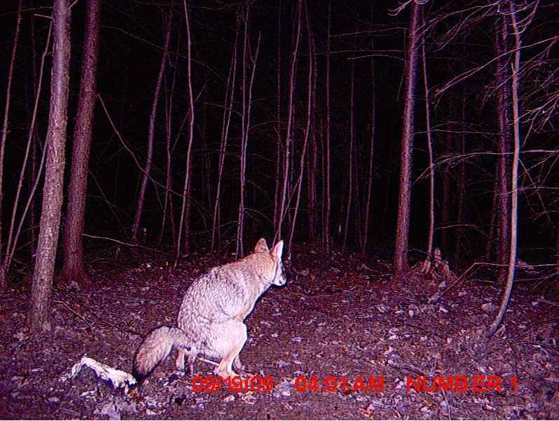 09-trail-cam-animals-funny-when-humans-arent-around