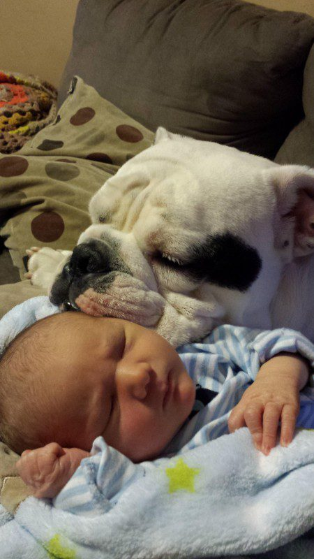 10-dogs-with-babies (1)