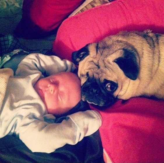 11-dogs-with-babies