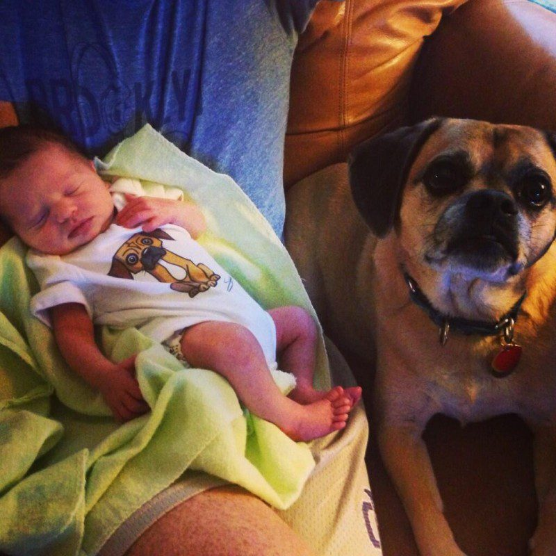 12-dogs-with-babies