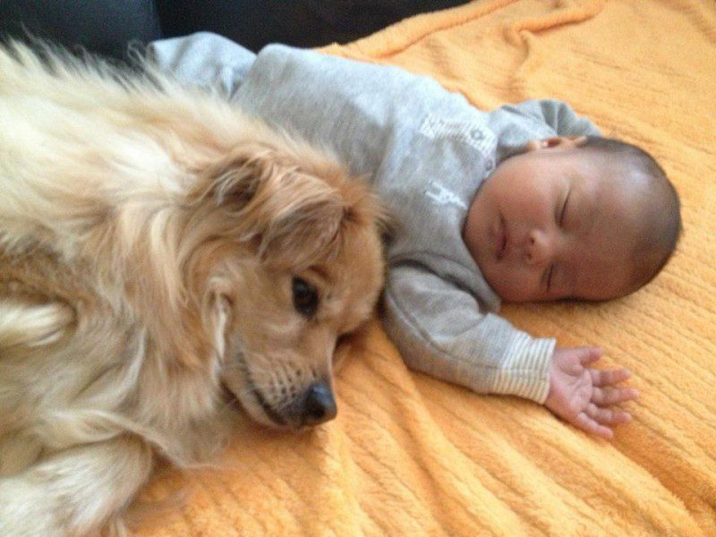 13-dogs-with-babies
